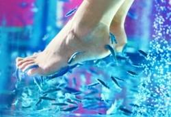 Релакс и здраве за Вашите крака! СПА процедура с рибките-доктори гара руфа в NSB Beauty Center! - Снимка