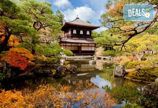 Заредете тялото и духа си с 60-минутен Японски йомейхо масаж в Massage and therapy Freerun - Снимка 3