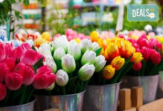 Екскурзия до Холандия за Фестивала на лалетo и парада на цветята! 9 нощувки и закуски, транспорт и посещение на Амстердам, Будапеща, Прага, Залцбург, Мюнхен и Брюксел! - Снимка 2