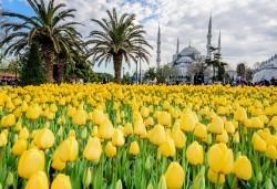 Посетете приказния Фестивал на лалетата в Истанбул през април! 2 нощувки със закуски в хотел 3*, транспорт и посещение на църквата Свети Стефан! - Снимка