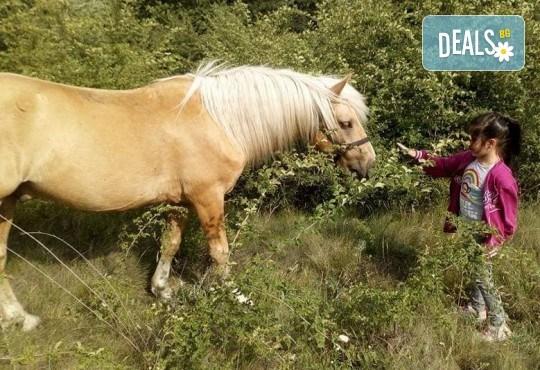 Урок по езда сред природата за двама с инструктор и екипировка от Ранчо Thracian Spirits! - Снимка 3
