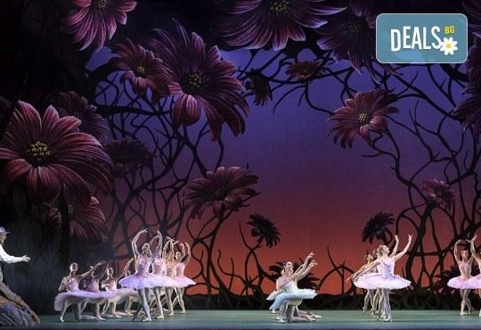 """Кино Арена представя впечатляващ балет от сцената на Ковънт Гардън ! """"Дон Кихот"""", спектакъл на Карлос Акоста, гледайте на 3, 6 и 7 април в кината в София! - Снимка 4"""