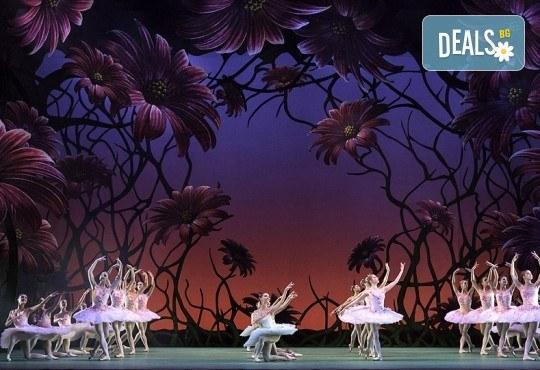 """Кино Арена представя блестящ балет от сцената на Ковънт Гардън ! """"Дон Кихот"""", спектакъл на Карлос Акоста, гледайте на 3, 6 и 7 април в кината в страната - Снимка 4"""