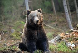 Еднодневна екскурзия на 20.04. до Белица с посещение на парка за танцуващи мечки и Добърско! Транспорт и водач от агенция Поход! - Снимка
