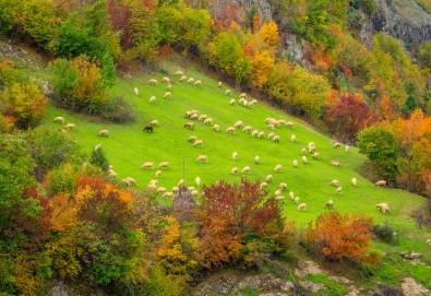 Есенна екскурзия в Родопите, с Дари Травел! 1 нощувка със закуска и вечеря в хотел 3* в Пампорово, транспорт, посещение на Ягодинската пещера и Дяволското гърло - Снимка