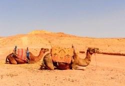 През есента до екзотичния Дубай! 4 нощувки със закуски и вечери в хотел 3* или 4*, самолетен билет, трансфери, сафари в пустинята, посещение на Абу Даби и круиз в Дубай Марина! - Снимка