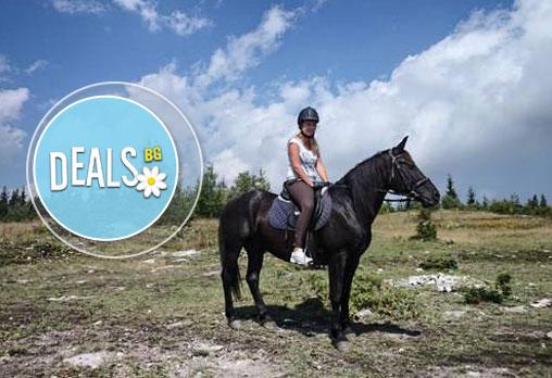 ДВА часа коннен преход - конна езда/ разходка с кон за начинаещи с инструктор в полите на Родопите от Конна база Стела