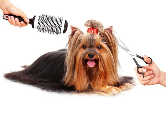 Спа пакети за Вашия домашен любимец! Къпане, оформяне или пълна пролетна промяна на кученца от дребни породи в Serdika Groom by P&T!